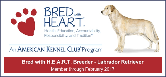 AKC Bred with H.E.A.R.T Member